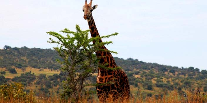 2 Days Akagera Safari to spot different wildlife